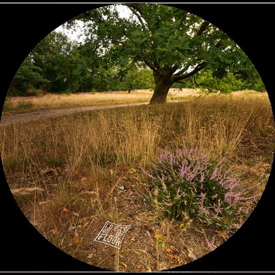 behangcirkel-heide-landschap-bestelnummer-682920