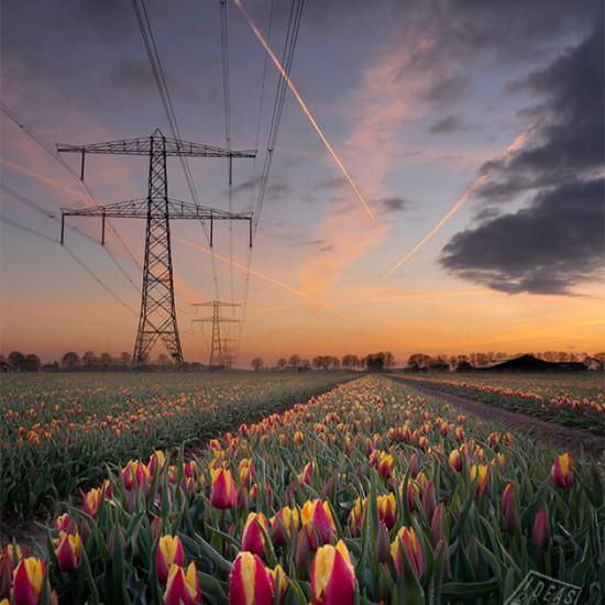1177521-Tulpenveld-Zevenaar-ondergaande-zon