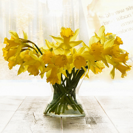Foto van narcissen geel bestelnummer 162216