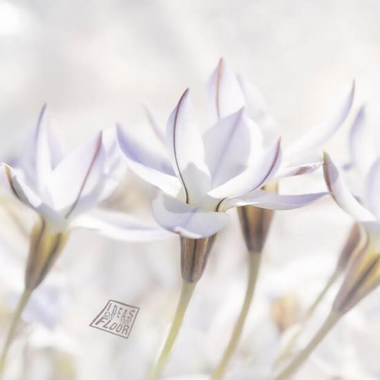 Bloemen Wit Bestelnummer 465620