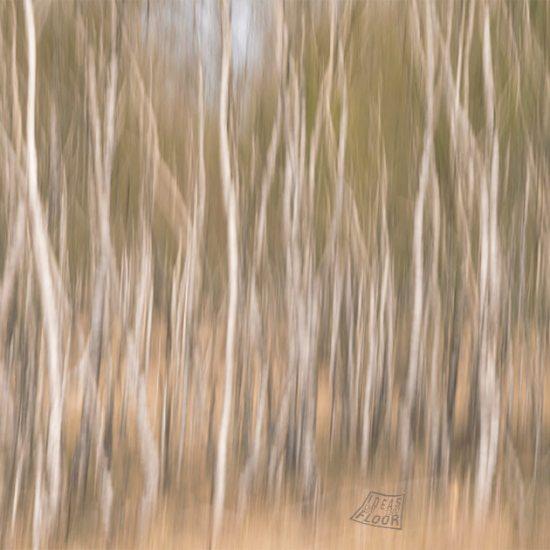 176021-Dancing-Trees-I