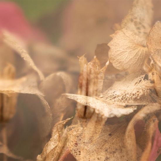 fine-art-fotografie-bloemen-herfst-variant-recthoek-titel-fall