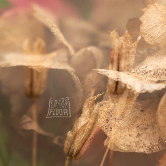 fine-art-fotografie-bloemen-herfst-titel-fall