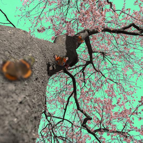Fotografische kunst Butterfly bohemian love A