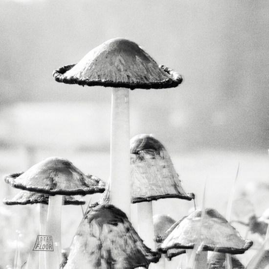Fotografische-kunst-fine-art-fotografie-paddenstoelen-titel-unnoted