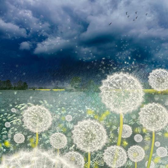 Wishes-wolkenlucht-pluizebollen-donkerder