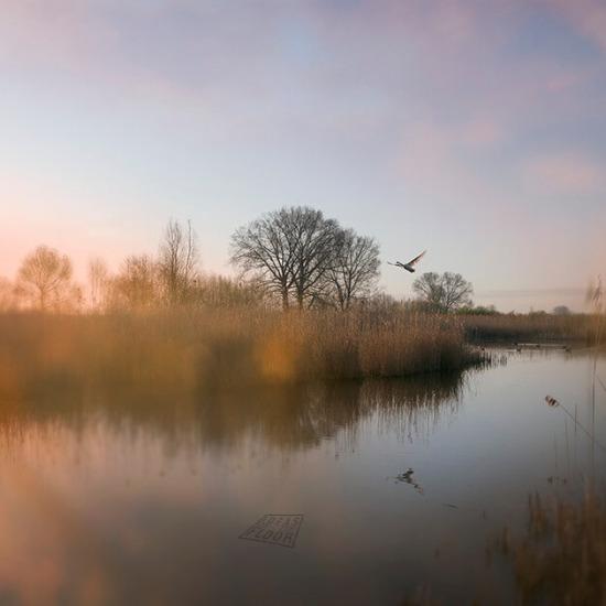foto-vroeg-morgen-zwaan-water-bestelnummer-026521