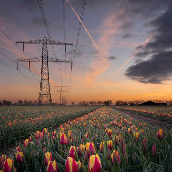1177521-Tulpenveld-Zevenaar-zonsondergang-mooie-wolken
