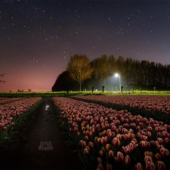 240021-tulpenveld-bij-nacht-stereen