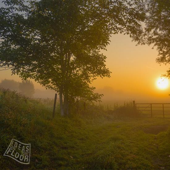 282119-Gelders-weiland-hekje-bomen-zonsopkomst-mist