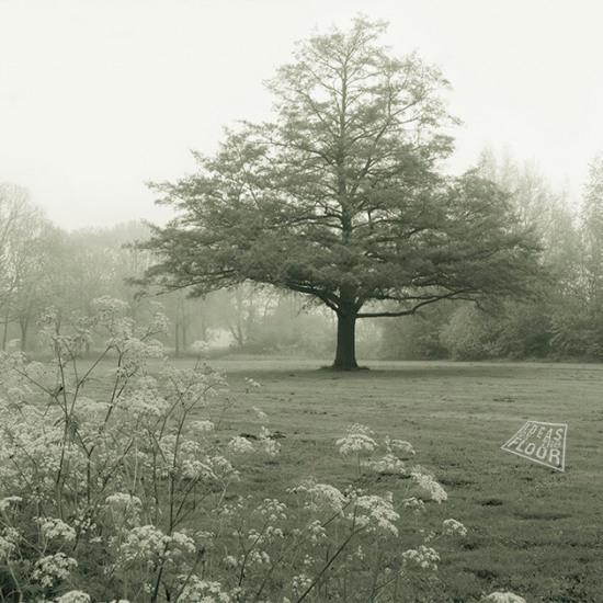 299621-Boom-aan-Breuly-Zevenaar-mist-zwartwit
