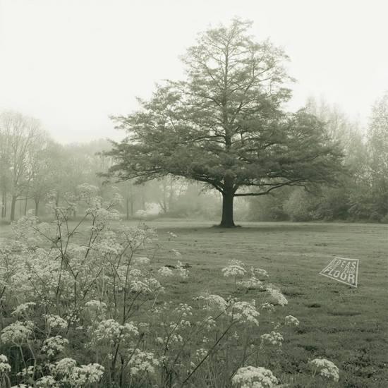 299621-Boom-aan-Breuly-Zevenaar-zwartwit-mist