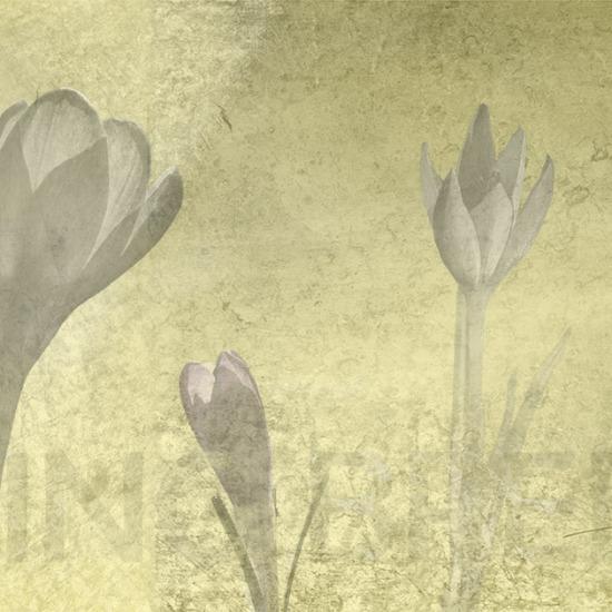 Fotobehang-panorama-titel-Spring-breeze-yellow