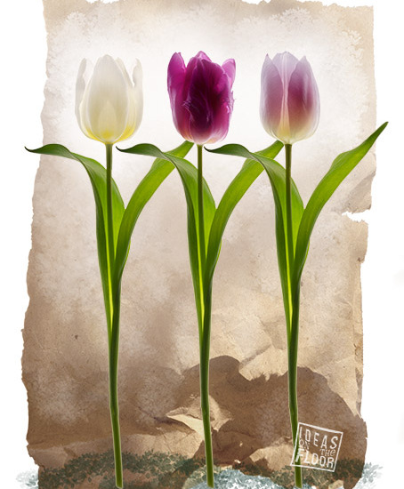 Tulip fever, wit