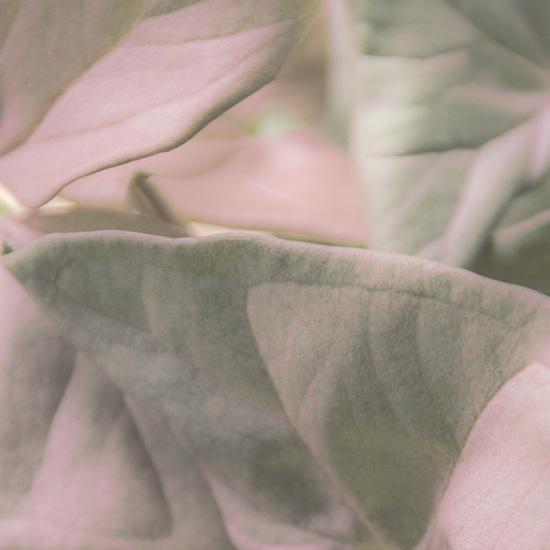 Leaf love pink