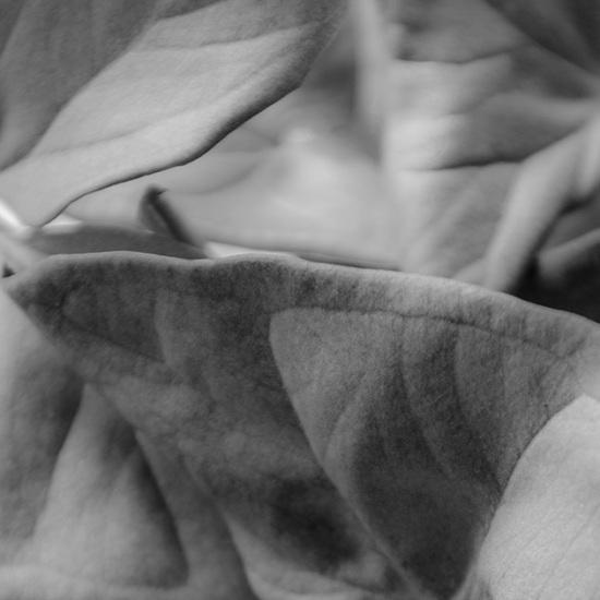 Leaf love grey