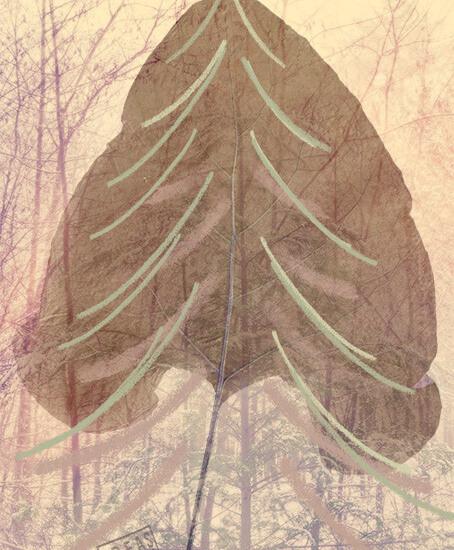 Wandkleed-kerstboom-botanisch