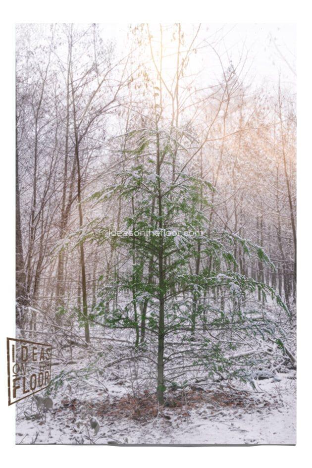 173619-Magisch-kerstboompje-wandkleed