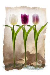 Nieuw ontwerp voor wanddecoratie met drie prachtige tulpen tegen een creatieve achtergrond